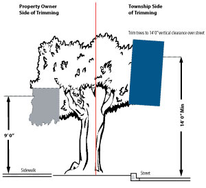 Street Side Tree Guidelines